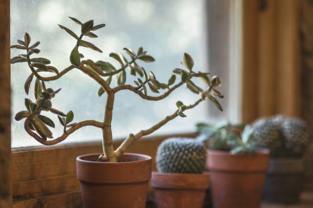 Umidificatore piante in vaso