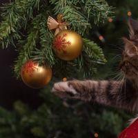 Come preparare un albero di Natale a prova di gatto