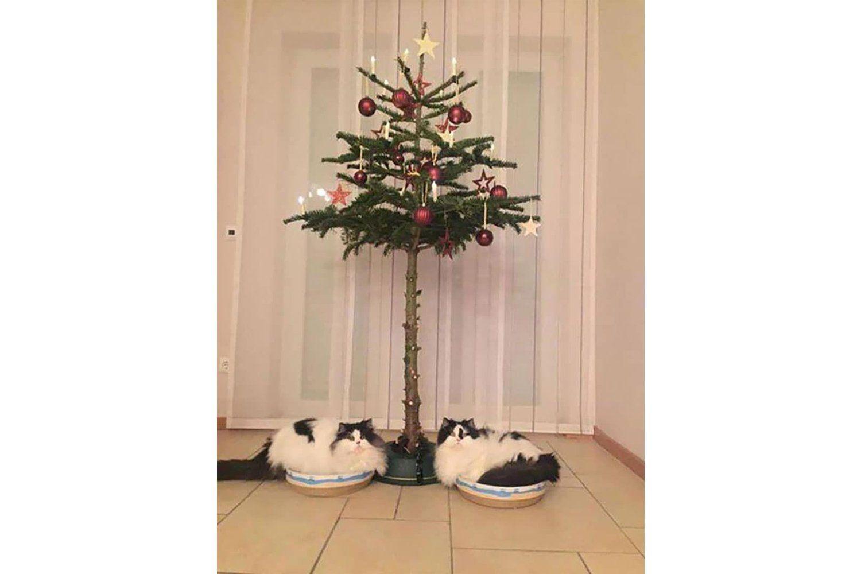 Albero Di Natale E Gatto Come Fare.Come Preparare Un Albero Di Natale A Prova Di Gatto