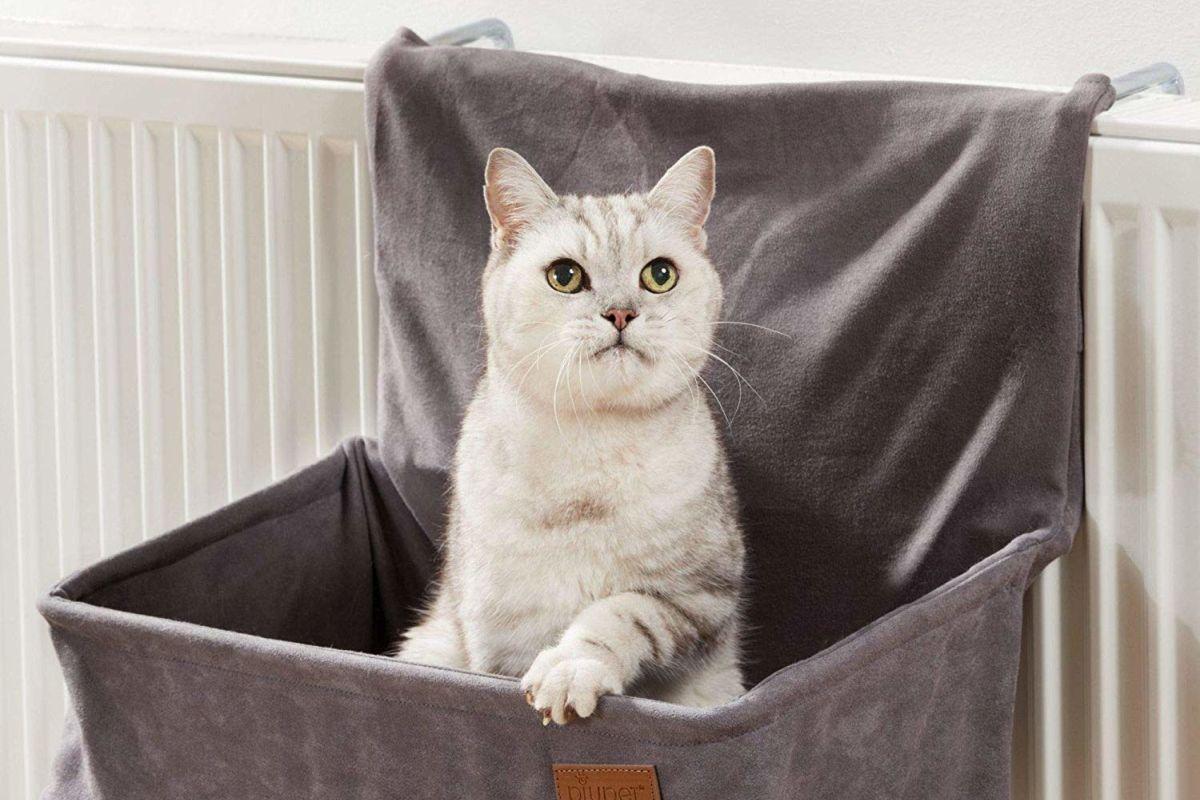 Cuccia Gatto Fai Da Te ▷ migliori cucce per gatti 2020 (top 5) | qualescegliere